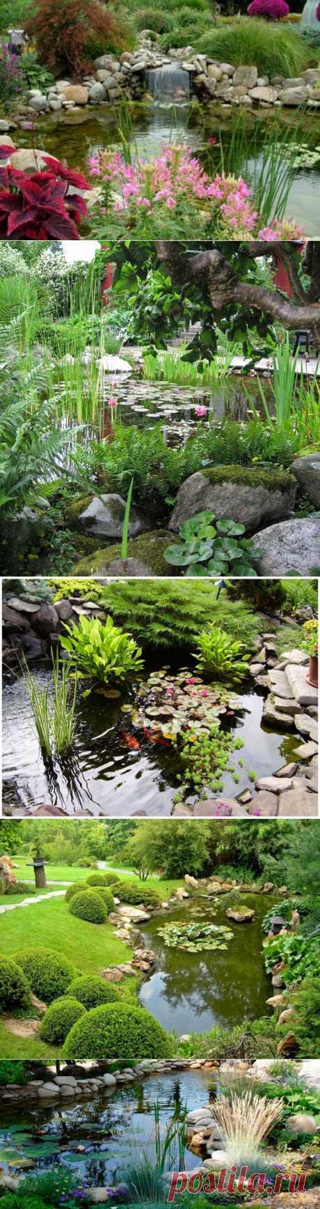 (+1) тема - Какие растения выбрать для декоративного пруда | Роскошь и уют