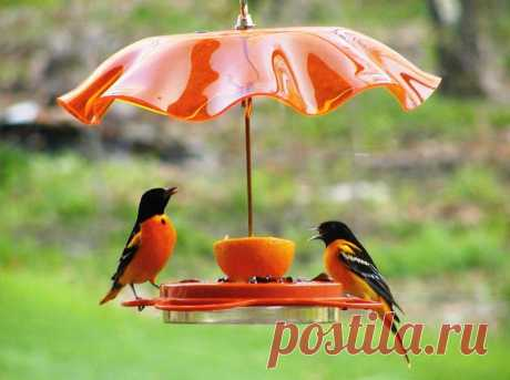 Летний сезон в разгаре, пора подумать о кормушках для птиц. За границей такие продаются в магазинах, но мы то знаем, что подобный шедевр можно сварганить из старой советской люстры.