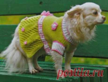 Вязаная одежда для собак своими руками: вяжем платье для собаки Предлагаю связать вашей маленькой собачке такую одежду, как платье. Это платье для собаки небольшого размера, оно вяжется спицами по такому же принципу, как и такая вязаная одежда для собак своими руками, как свитер с рукавчиками.