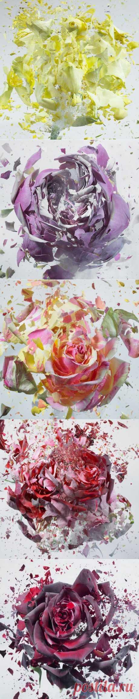 (+1) тема - Цветочные взрывы в высокоскоростной съемке Мартина Климаса | Занимательный журнал