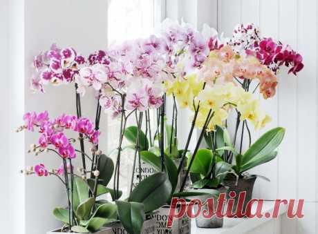 Идеальное место в квартире для цветения орхидеи Как ухаживать за орхидееgй, чтобы она цвела.