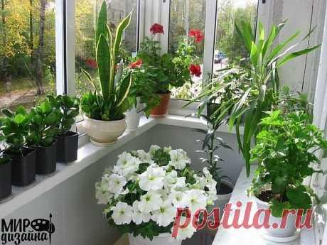 Цветы в вашем доме, если подоконник на север • Сияние Жизни
