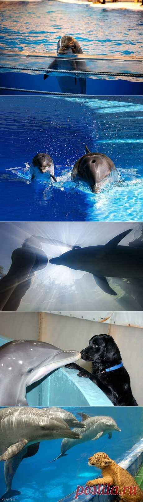 Удивительные факты о дельфинах |