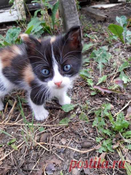 Новые фотографии котята няшные.
