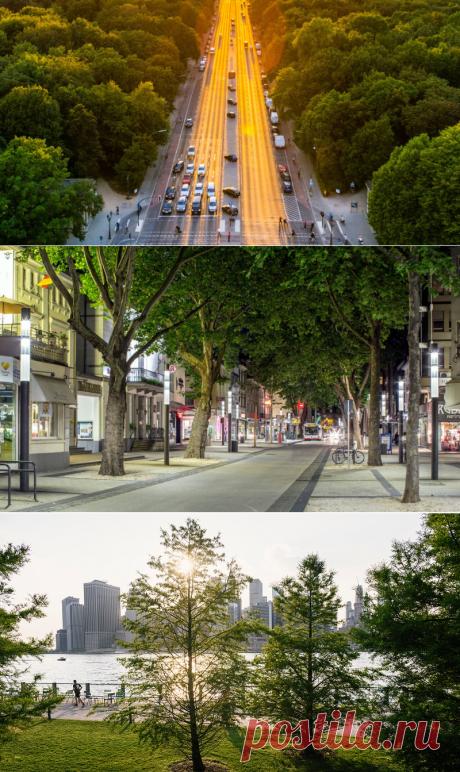 Деревья в городах могут улавливать столько же углерода, как тропический лес - Экологический дайджест FacePla.net