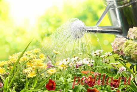 Полив в жару — главные правила — Ботаничка.ru