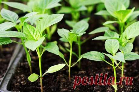 Лунный календарь 2020: благоприятные дни для посева семян на рассаду | Рассада (Огород.ru)