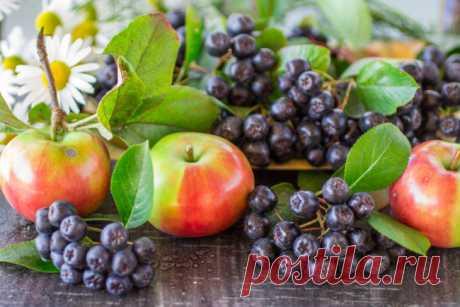 Черноплодная рябина: польза и вред для здоровья Арония богата витаминами