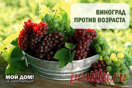Шиповник, виноград, вино - советы.