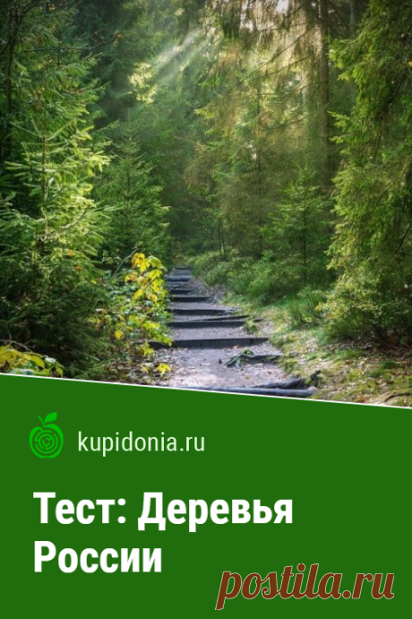 Тест: Деревья России. Интересный тест о деревьях России. Проверьте свои знания!