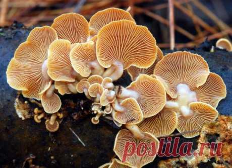 Невероятно притягательные и коварные грибы — Наука и жизнь