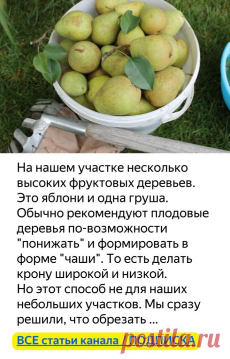 Как собрать фрукты с высокого дерева? (немного смекалки)   Есть время под солнцем   Яндекс Дзен