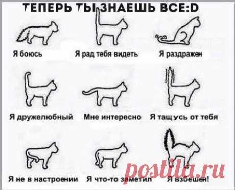 Как понять кошку | Хитрости Жизни