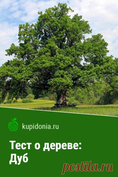 Тест о дереве: Дуб. Интересный тест о дубе из серии тестов о деревьях. Проверьте свои знания!