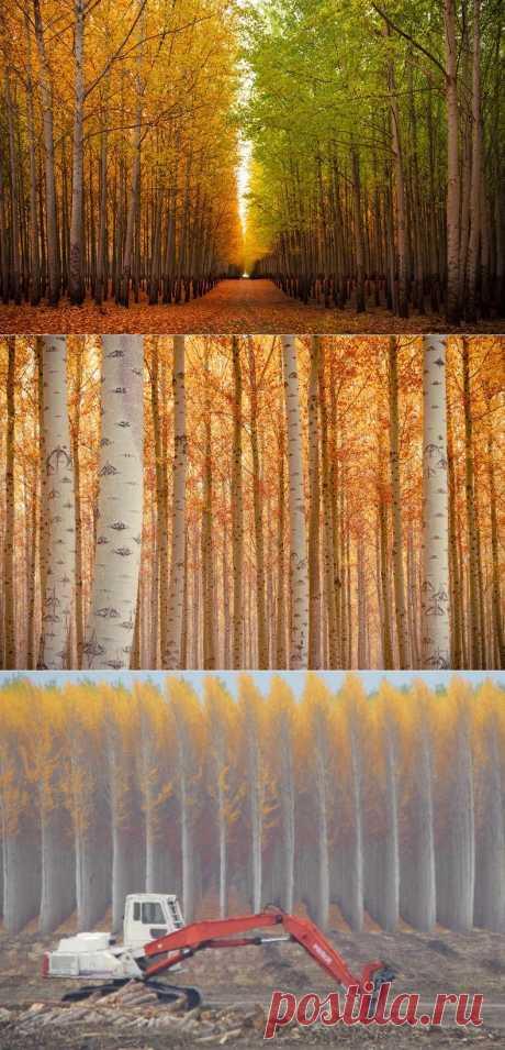 Лучшие фотографии со всего света - Ферма по выращиванию деревьев
