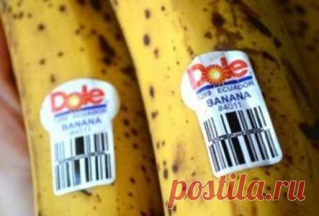 Будьте осторожны, когда покупаете бананы!  Знаете ли вы, что означают эти наклейки?   Уверены, что вы хоть раз в жизни замечали наклейки на бананах.  Но Вы когда-нибудь задавались вопросом, что же они означают?  Итак: Если на них 4-значный код, который начинается номерами 3 или 4, то это означает, что продукт был выращен по принципу интенсивного сельского хозяйства, что также подразумевает использование удобрений и пестицидов. Если продукт имеет 5-значный код, который начи...