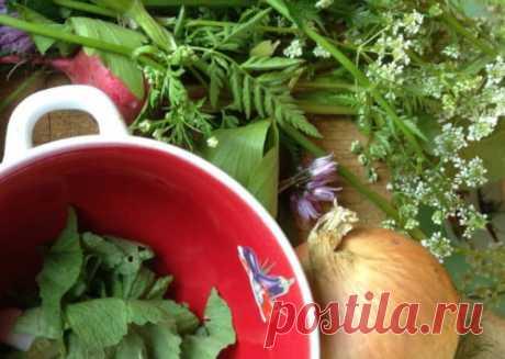 🍀 Трава сныть — полезные, лечебные свойства, рецепты приготовления и как определить растение