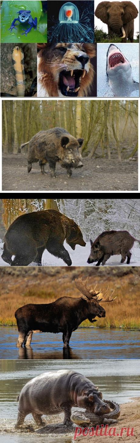 Список опасных животных. Что нужно о них знать. - AllSuch.Ru