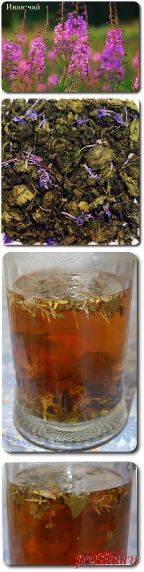 Иван-чай в Москве