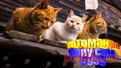Любите смотреть видео про смешных котов? Тогда мы уверены, Вам понравится наше видео 😍. Также на котомании Вас ждут: видео кот,видео кота,видео коте,видео котов,видео кошек,видео кошка,видео кошки,видео о котах, видео про, видео смешные кошка, кот смешное видео, коты 2020, кошка видео смешное, о котах, приколы о кошек, прикольные кошки, с котами, самые смешные коты, смешные животные бесплатно, смешные кошки
