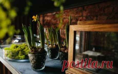 Лофт в цветах: интерьер флористической студии Как оформить растениями лофт? Собственным примером делится флористическая студия VISIONÄR by Roman Kovalishin.