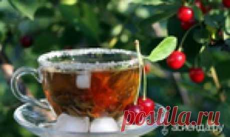 Чай из вашего сада: польза и здоровье