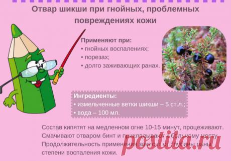 Шикша сибирская: что за ягода, как применять, рецепты народной медицины при нервных расстройствах, мигрени, заболеваниях глаз, простуде и не только