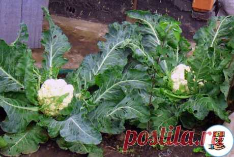 Рассказываю, какие овощи я сажаю В ТЕНИ огорода и всегда получаю БОГАТЫЙ урожай без особых проблем | 6 соток