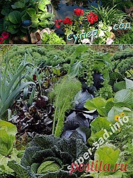 Смешанная грядка - выгодные соседи. | Супер сад