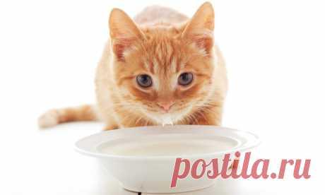 Какие крупы можно давать кошкам вместе с мясом или рыбой, кормят ли котят манной кашей?