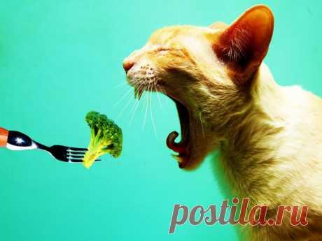 Какие овощи предпочитают кошки? | nashi-pitomcy.ru
