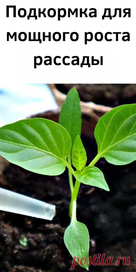 Подкормка для мощного роста рассады - Стильные советы