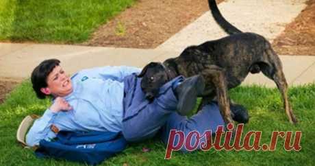 Что делать, если на вас напала собака: 5 важных советов Никто не застрахован от нападения бродячей собаки. Чаще собаки нападают на людей, защищая территорию. Если нападает одна собака из стаи, к ней присоединятся и другие. Агрессивное животное может напасть на ничего не подозревающего прохожего...