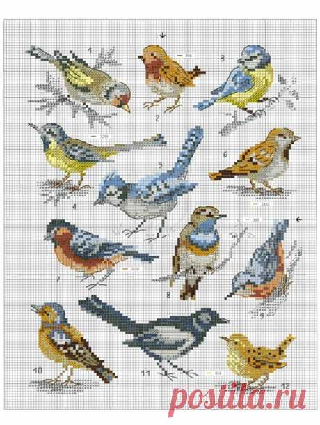 (6) Gallery.ru / Фото #44 - Oiseauz, papillons et petites betes - Chispitas