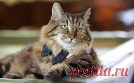 Советы по долголетию от самого старого кота в мире