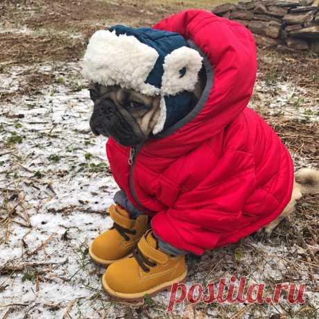 Прогноз на зиму... Ожидается собачий холод... 🐶 ❄