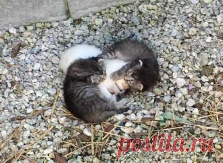 Котята старательно защищали сестренку от холода - Братья наши меньшие - ГОРНИЦА -блоги, форум, новости, общение