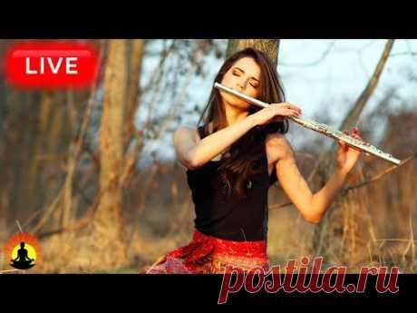 🔴Relaxing Flute Music 24/7, Calm Music, Relaxing Music, Flute Music, Meditation Music, Sleep, Zen