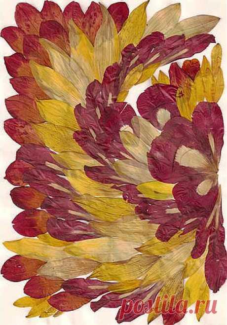 """""""Крыло Жар-Птицы""""     Материал - лепестки: подсолнух, розы, пион"""