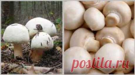 Вкусные блюда с грибом шампиньон | Народные рецепты здоровья