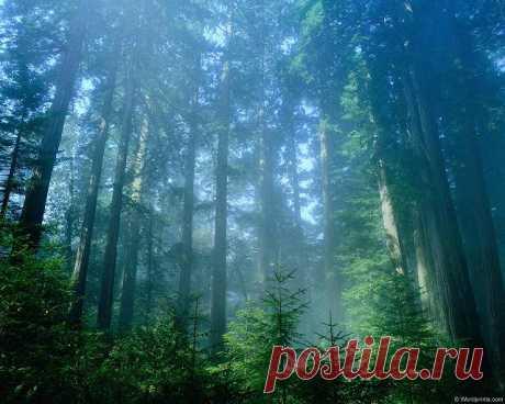Тайга — мой дом, или как не заблудиться в лесу — Планета и человек