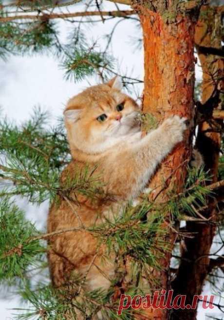 Забавные картинки (30 фото) » Клопик.КоМ - сайт любителей животных