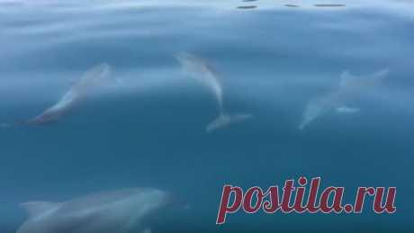 Милые дельфинчики резвятся в Крыму