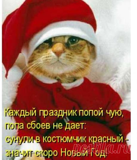 Красный костюмчик. | KotoMail.ru