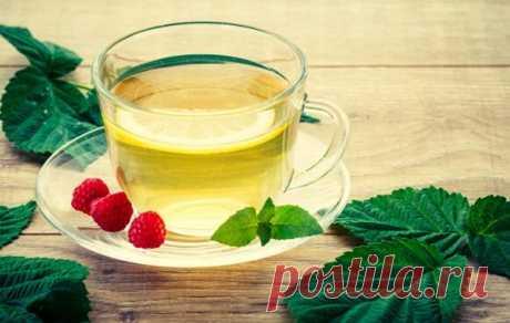 Листья малины. В них столько пользы! Заготавливаем для заваривания душистого чая и для поддержания здоровья! | Цветочный дом Самсон Букет | Яндекс Дзен