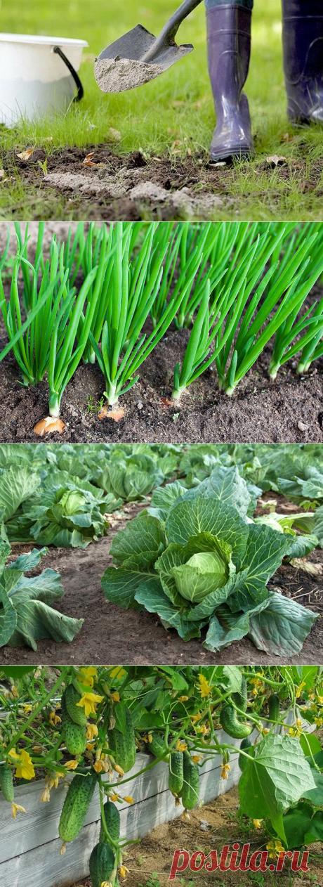 Зола как удобрение: для каких растений стоит применять золу на огороде