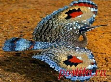 Птица-бабочка. Солнечная цапля. Чудо природы.