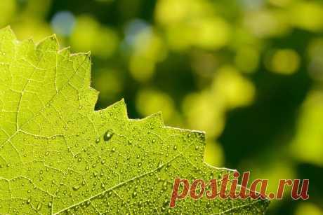 Полив виноградника. Что необходимо знать | ВИНОГРАДНИК | Яндекс Дзен