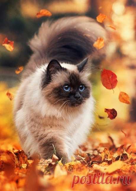Что такое осень – это котик 🍁