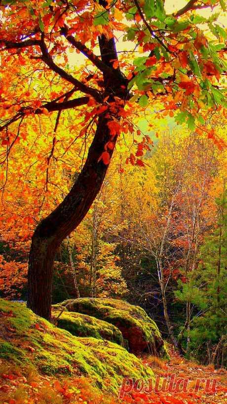 Скачать 938x1668 осень, лес, деревья, пейзаж обои, картинки iphone 8/7/6s/6 for parallax